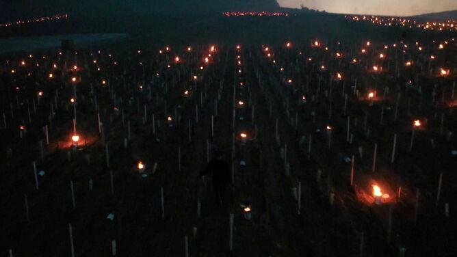 Wielkie świece ogrzewają słynne winnice we Francji