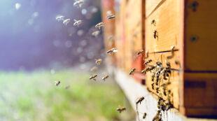 """""""To jest wyrok dla pszczół"""". Apel o cofnięcie zgody na szkodliwe pestycydy"""