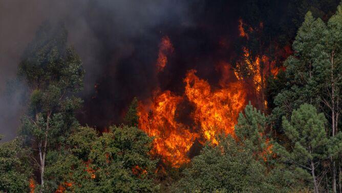 Pożary lasów w Portugalii. <br />Zginął strażak, trzech zostało rannych