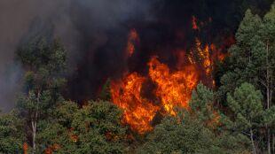 Pożary lasów w Portugalii. Zginął strażak, trzech zostało rannych