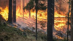 Miał podpalać lasy, by potem je gasić. Strażak złapany dzięki kamerze